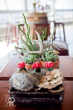 Succulents and Antlers and moss, oh my!!   Rebecca Lorrine Photography for Branching Out Floral and Event Design