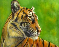 Javan, Asian Tiger in oils,original painting, Sandra Cutrer Fine Art. Prices on web site. Prints available!