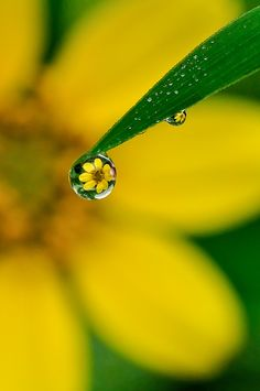 Water Drop Photography, Micro Photography, Object Photography, Photography Projects, Image Photography, Creative Photography, Amazing Photography, Nature Photography, Fall Pictures