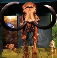 National Museum of Natural History in Washington DC, D.C. - FREE ADMISSION!!!