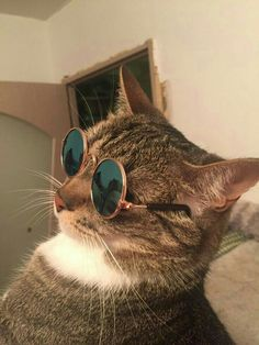 Buy these Cool Cat Glasses here > Link Cute Funny Animals, Funny Animal Pictures, Cute Baby Animals, Cute Dogs, Funny Cats, Cute Cats And Kittens, Baby Cats, Cool Cats, Kittens Cutest