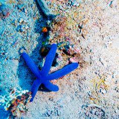 Stars and colors http://www.snorkelingear.com #Snorkelingear #snorkeling #snorkelingmask #ocean #sea #underwater #sealife #subaqautic #dive #diving #explore #enjoy #fish #coral #turtles #marine #submarine #boat #surf #beach #travel #swim