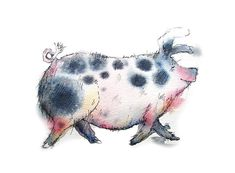 Pig limited edition print - Tilly the pig, pig print, pig picture, Gloucester Old Spot print Watercolor Animals, Watercolor And Ink, Chris Riddell, Hare Pictures, Pig Drawing, Pig Art, Quentin Blake, Cute Animal Drawings, Ink Illustrations