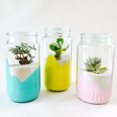 Airplant jars by candi&co. (Facebook.com/Candiandco.nz)