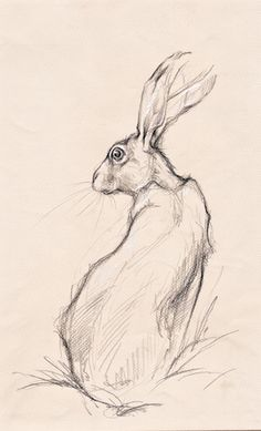 Animals Drawing Available artwork Animal Sketches, Animal Drawings, Art Drawings, Hare Illustration, Rabbit Art, Bunny Art, Wildlife Art, Of Wallpaper, Animal Paintings