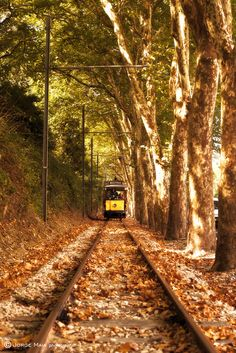 The autumn tram,Sintra, Portugal. I've been to Sintra and loved it! Sintra Portugal, Spain And Portugal, Portugal Travel, Places Around The World, Oh The Places You'll Go, Places To Visit, Around The Worlds, Beautiful World, Beautiful Places