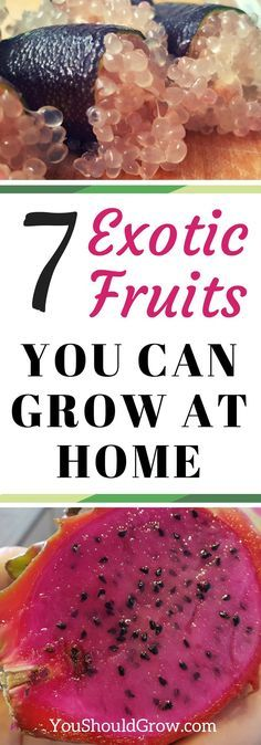 Do you love exotic fruits? These seven fruits can be grown at home. Click to find out how you can grow these exotic plants at home!