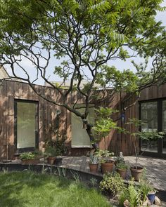 Tree House, east London by 6a architects (residential project)