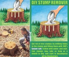 Gardens Discover Outdoors Discover Gardens Discover Tree Stump Remover using Epsom Salt and Drilling Holes. Garden Yard Ideas, Backyard Projects, Lawn And Garden, Garden Projects, Kill Tree Stump, Tree Stump Killer, Weed Killer Homemade, Stump Removal, Begonia