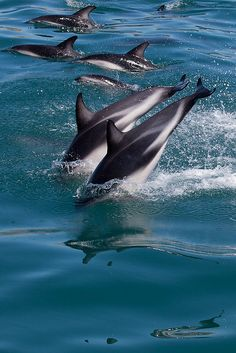Dolphins Dive in Synchronicity!