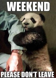 weekend please dont leave me funny quotes cute memes animals quote meme weekend panda