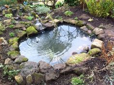 Wildlife pond beckons to frogs, turtles and the furry and feathered.
