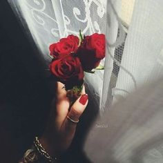 Flowers Dp, Luxury Flowers, Flower Phone Wallpaper, Rose Wallpaper, Beautiful Hijab, Beautiful Roses, Dps For Girls, Girls Hand, Girly Pictures