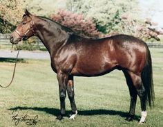 NOT FOR LOVE (USA) B c 1990, Mr. Prospector - Dance Number. 29 starts, 6 wins, 13 placings. Unremarkable on the track and retired to stud in 1996, he is the Leading Sire in North American Earnings for 2003-2006. Leading sire in Maryland  and outside Kentucky in 2010. Grandson of the champion filly, Numbered Account. He's the maternal great-grandsire of California Chrome.