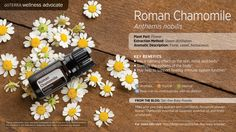 While providing a sweet, floral aroma, Roman Chamomile can soothe body systems as it supports calming effects for the skin, mind and body.*