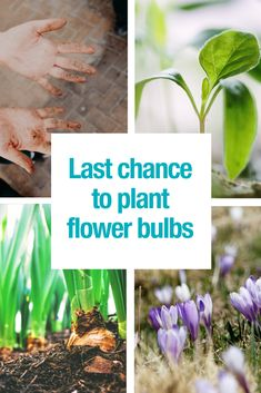 You want to have beautiful and colorful flowers in spring and summer? Act now! Find out everything about planting your flower bulbs this year.