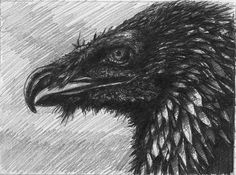 """""""Vulture"""" by Peter Kneeshaw on - Vulture, Print Poster, Art Prints, Gallery, Illustration, Animals, Art Impressions, Animales, Roof Rack"""