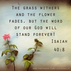 """The grass withers and the flower fades but the Word of our God will stand forever!"" Isaiah 40:8 ~ Amen!"