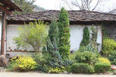 Anleitungen im Bereich Garten zum Thema Baumkunde