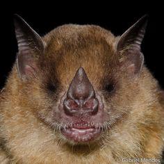 gabrielmendes-5aa0 bats morcegos
