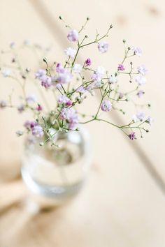Eine Vase mit Schlei