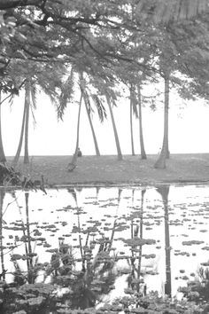 Lagoon                                                         Hawaii