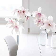 """758 tykkäystä, 21 kommenttia - @martidamska Instagramissa: """"Magnolias - never enough ✌ Niedzielne dzień dobry. Przepraszam Was za ten magnoliowy spam -…"""""""