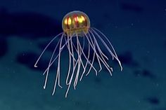 Jellyfish from Outer Space? First Look Makes You Think It! | Video
