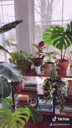 Room With Plants, House Plants Decor, Plant Decor, Green Plants, Potted Plants, Indoor Plants, Green Garden, Easy Care Plants, Plant Care