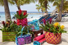 bromeliads on vacation