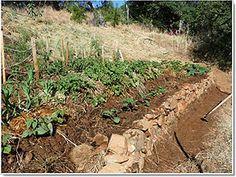 From Turf/Food Not Lawns, Lasagna Gardening, to Hugelkultur!!!
