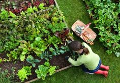 Use coffee grounds to fertilize your garden