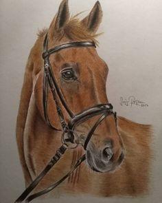 """Mi piace"": 21, commenti: 1 - SonjaR (@sonja.rrr) su Instagram: ""Pferd, Fuchs, Prismacolor Buntstifte #horseportrait #horse #horses #equestrian #equestrianart…"""