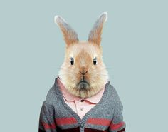 European-Rabbit---Oryctolagus-Cuniculus-copia