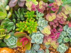 If you don't have much of a green thumb, give succulents a try! P.S. they're drought-resistant.