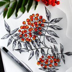 #rowanberry #botanical #ink #pencil #drawing #tattoodesign #essitattoo #tattooart #tattoodrawing #natureart #illustration #art #sketch_daily #blxckink #art_we_inspire #artgram #instaartist
