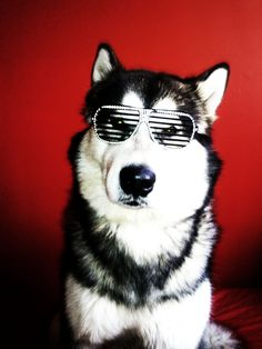 Hipster DOG ;)