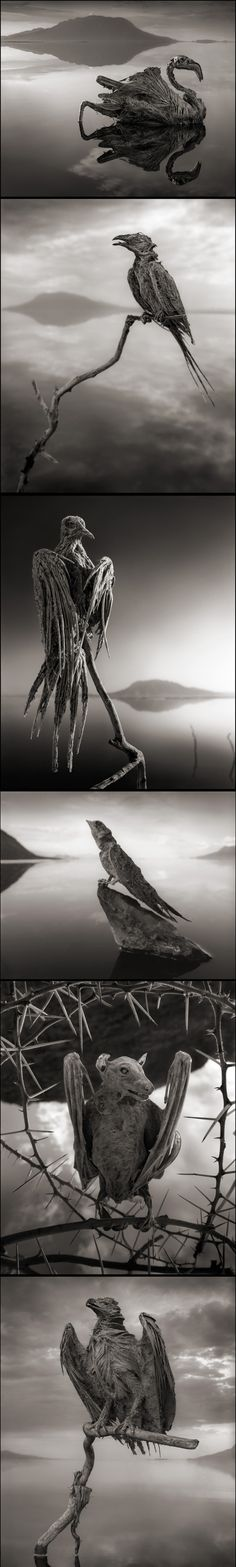 There's a deceptively still body of water in Tanzania with a deadly secret—it turns any animal it touches to stone. The rare phenomenon is caused by the chemical makeup of the lake.  Photographed by Nick Brandt in his new book, Across the Ravaged La - created via http://pinthemall.net