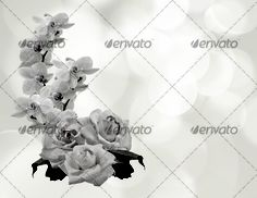 Beautiful flowers bokeh background with place for text 5