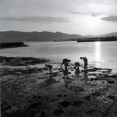 Picking of crabs, Karystos island, Photograph by Voula Papaioannou Benaki Museum - Photographic Archives Benaki Museum, Greece History, Places In Greece, Greece Photography, Greek Culture, Powerful Images, Photo B, Great Photographers, In Ancient Times