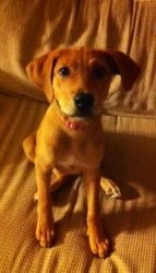 Ally Brown is an adoptable Beagle Dog in Thomasville, NC. Ally Brown is believed to be a beagle/hound mix who was born around April 2012. She was found on the side of the road in Archdale. She is ve...