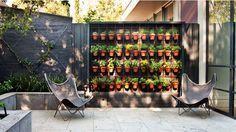 Jardim vertical para expor coleção de plantas
