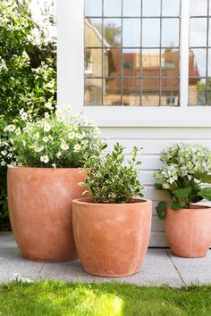 Classic terracotta garden pots never go out of style. This set of 3 from A by Amara is perfect for holding trees, shrubs and flowers. Big Garden, Garden Pots, Garden Whimsy, Garden Junk, Glass Garden, Backyard Patio, Backyard Landscaping, Big Potted Plants, Potted Trees Patio