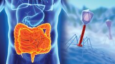 PHAGE THERAPY!! Major Advance in Intestinal Health - Life Extension
