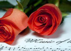 Orange roses - Bing Images