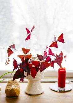 Surround yourself with beautiful plants: Oxalis Purple - FrenchyFancy Tiny White Flowers, Beautiful Flowers, Shamrock Plant, Oxalis Triangularis, Belle Plante, Decoration Plante, Plants Are Friends, Glass Birds, Plantation