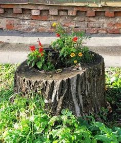 tree stump ideas pictures at DuckDuckGo