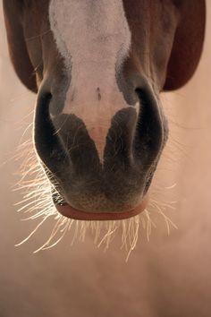 There's no such thing as a dumb horse. Just dumb men who make dumb comments about horses.