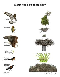Match the Birds with Their Nests (Color) on Exploringnature.org