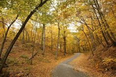 These are the 12 most popular Illinois state parks to visit in the fall, according to EnjoyIllinois.com.